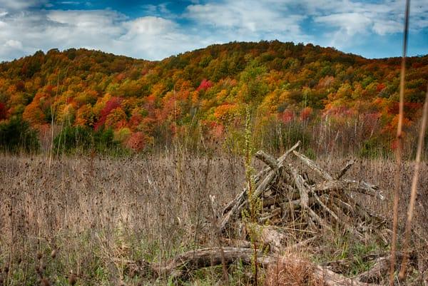 Michigan Autumn Field