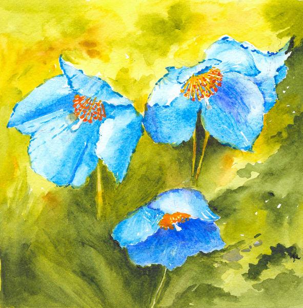 Blue Poppies - Denise Jackson