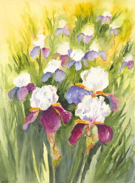 Iris Garden - Denise Jackson