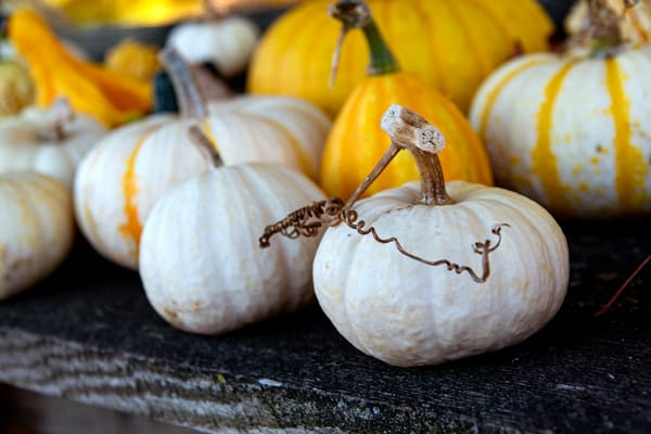 White and Yellow Pumpkins