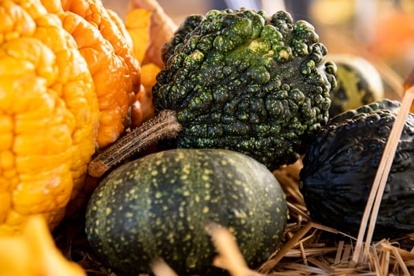 Various gourds appear to be snuggling in the hay.