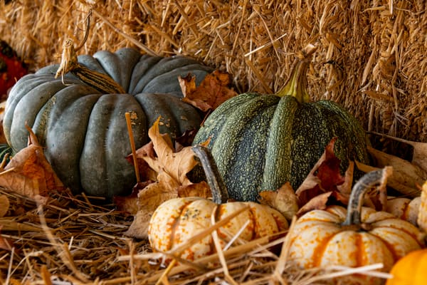 Gourds all nestled in the hay