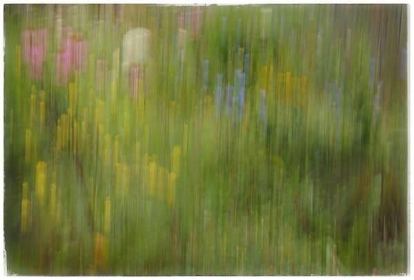 Flower Painting Art   Danny Johananoff
