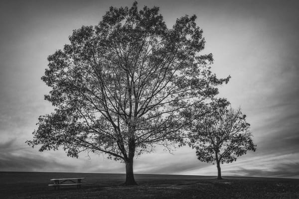 """Sam Lewis Park"" Photography Art | Inspired Imagez"