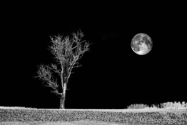 """Moonwalk"" Photography Art | Inspired Imagez"