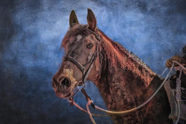 """Arabian Horse"" Photography Art | Inspired Imagez"