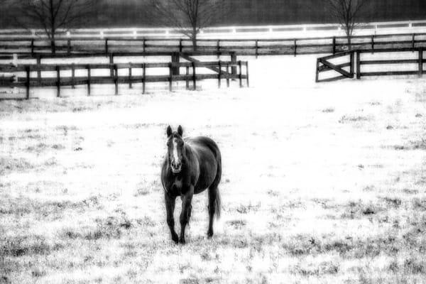 """Infrared Horse"" Photography Art   Inspired Imagez"