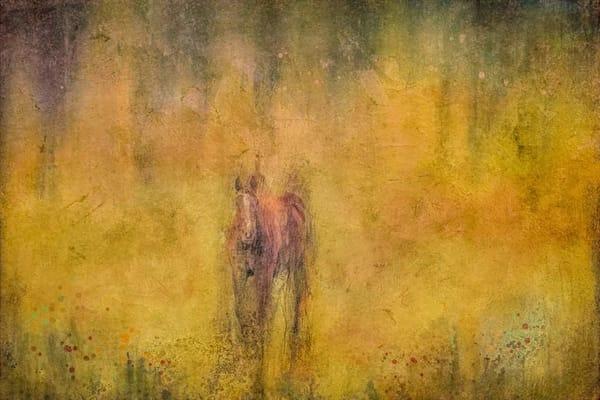 """Mystery Horse"" Photography Art   Inspired Imagez"
