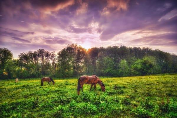 """Wrightsville Horses"" Photography Art   Inspired Imagez"