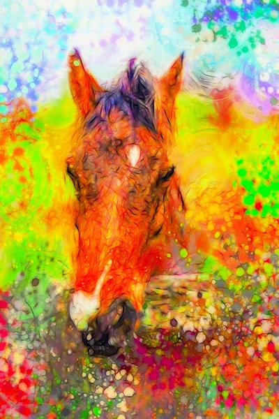 """Vibrant Horse"" Photography Art | Inspired Imagez"