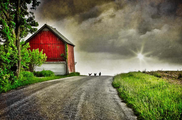 """""""Three Chickens Crossed The Road"""" Photography Art   Inspired Imagez"""
