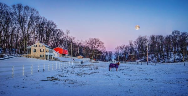 """Solo Horse"" Photography Art | Inspired Imagez"