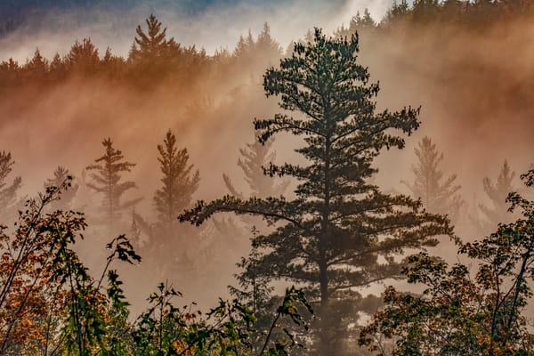 Mist Ical Morning Photography Art | David Lawrence Reade