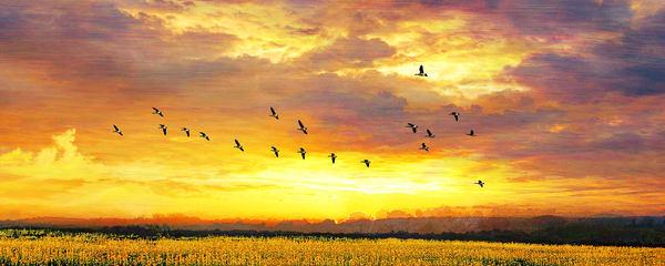 Sunset W Geese Art | Cincy Artwork