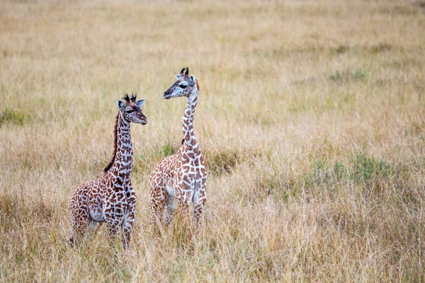 Africa   Kenya August 08 201806809 Photography Art | Brokk Mowrey Photography