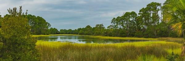 Tidal Marsh at High Tide