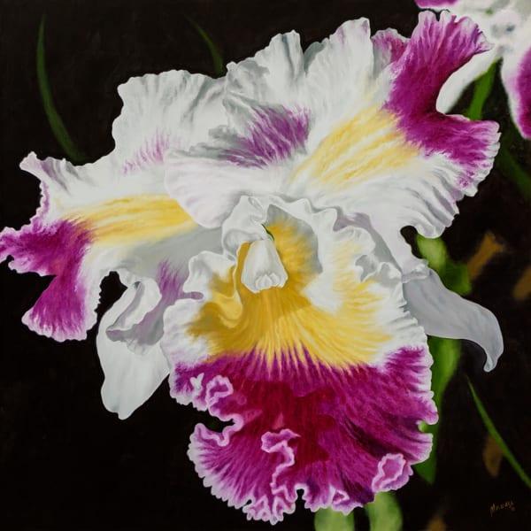 Orchid   Original Art   Mercedes Fine Art