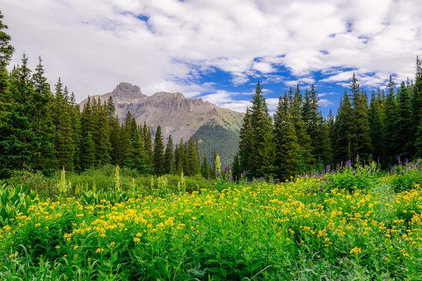 Meadow, Imogene Creek Valley, Colorado, 2013
