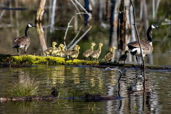Family Stroll Photography Art   David Lawrence Reade
