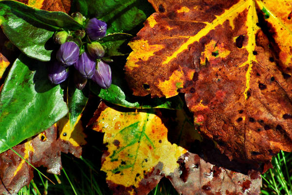 Leaves 'n Berries Photography Art | David Lawrence Reade