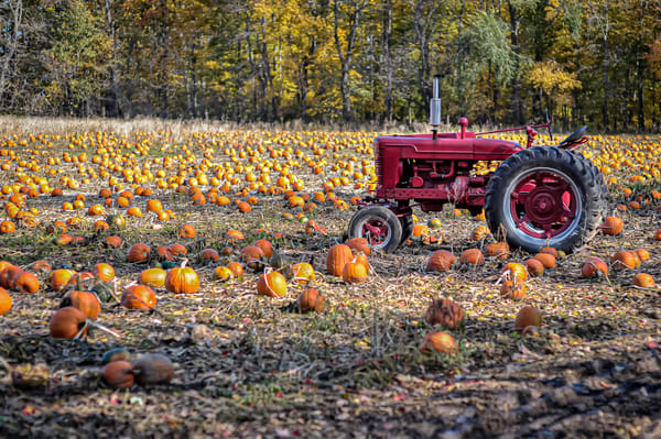 Tractor in Pumpkin Patch
