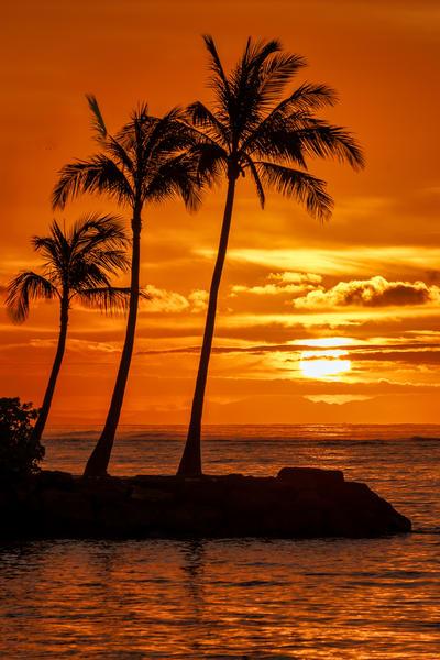 Three Palm Tree at Sunrise