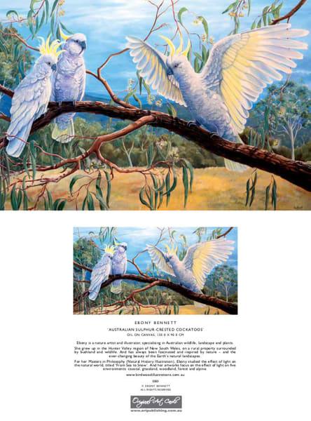 Sulphur-crested Cockatoo - 'Watchya Doin?'