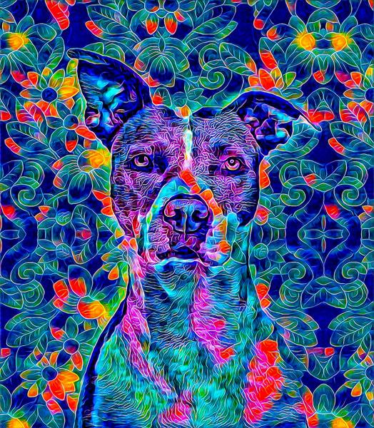 """Painterly Pitbull"" Photography Art | Inspired Imagez"