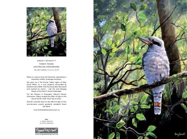 Australian Kookaburra - 'Forest Friend'