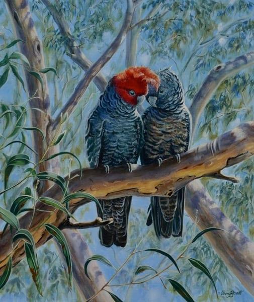 Gang Gang Cockatoos - 'Lovebirds'