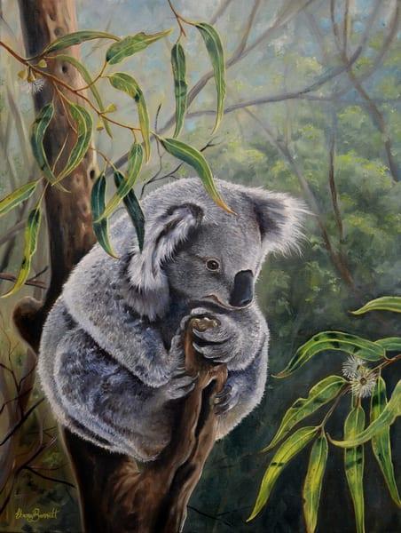 Koala - 'Amongst the Gumleaves'