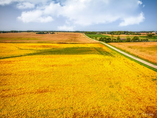Elburn Corn, 2020. Photograph by Thomas Wyckoff.