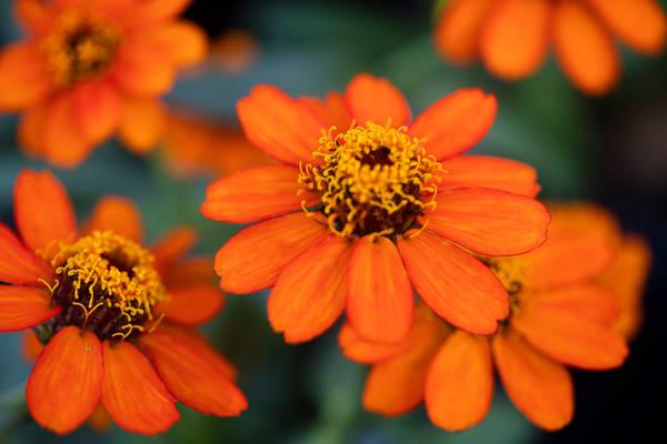 Orange Floral  Photography Art | Carol's Little World