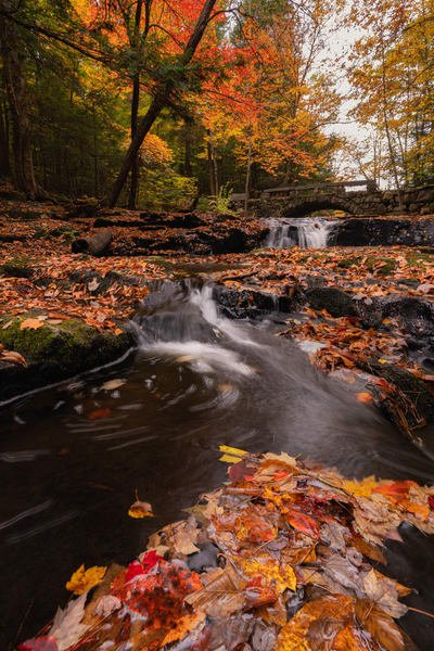 Autumn at Vaughn Woods