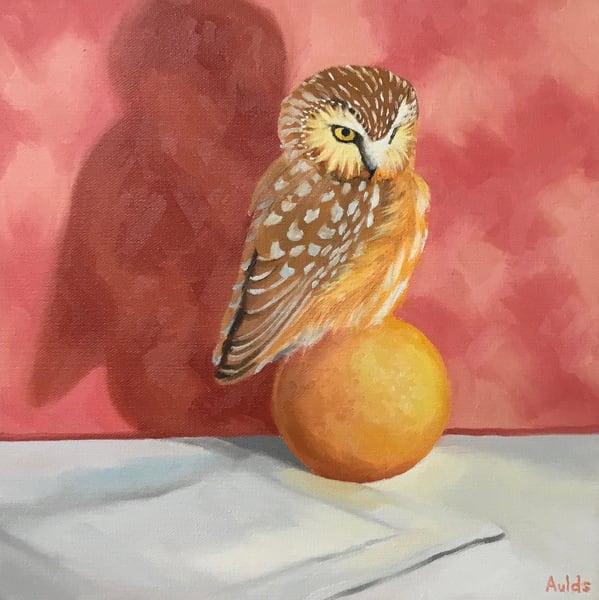 Pygmy Owl  Art   Suzanne Aulds Studio