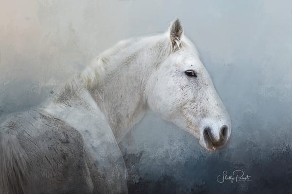 Gray Mare Photography Art | Shelly Priest Photography