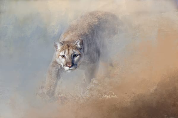 Stalking Cougar Photography Art | Shelly Priest Photography