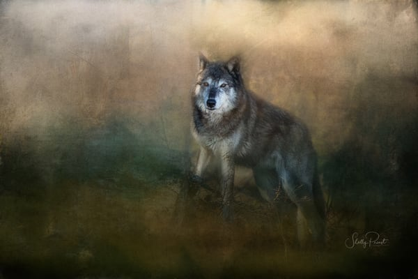 Tundra Wolf Photography Art | Shelly Priest Photography