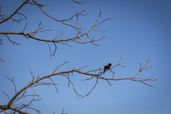 Blackbird Photography Art | Elizabeth Stanton Photography