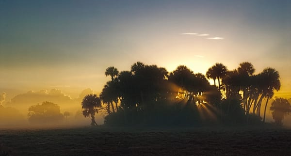 Sunrise filtered through a gathering of trees at a Florida ranch