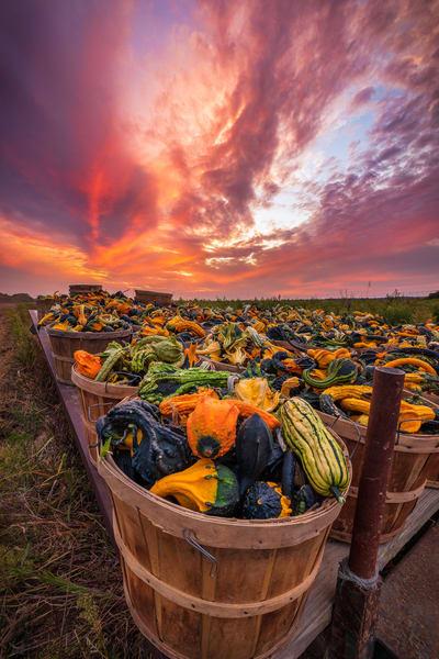 Gourdy Sunset Art   Teaga Photo