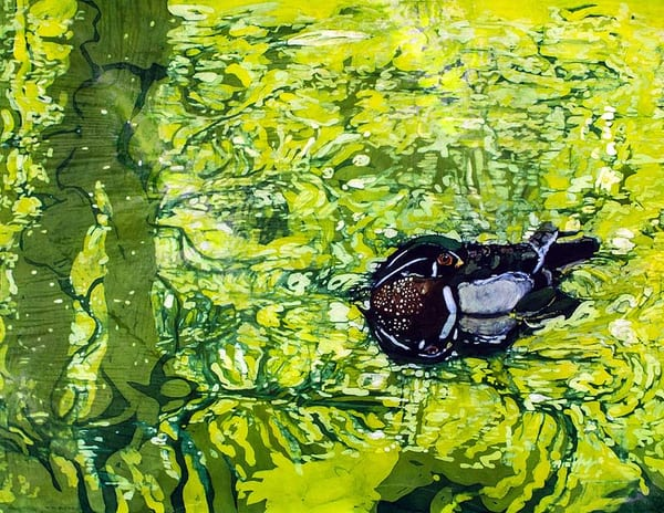 Drake. This lovely batik on silk painting done using the Japanese rozome process is based on a photograph I had taken at the Homosassa Springs State Wildlife Park. I loved the subtle colors and patterns of the reflections in the water broken up by t