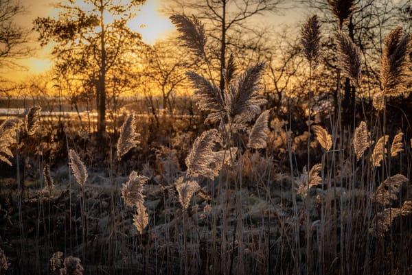 Wavering Photography Art | Elizabeth Stanton Photography
