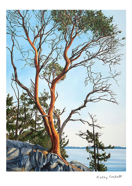 Hand signed 7x5 art card of an arbutus tree