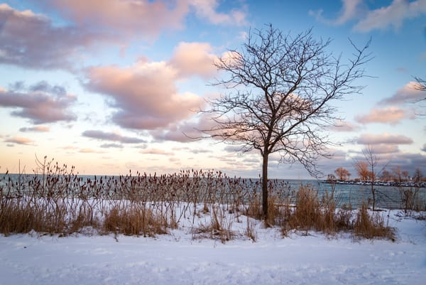Sumac And Snow Photography Art | Elizabeth Stanton Photography