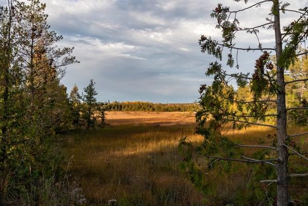 Field View Photography Art | Elizabeth Stanton Photography