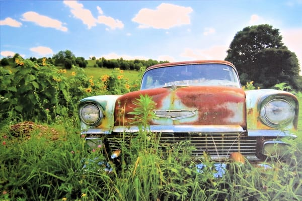 Chevy Sunflowers Photographic Image on Pearl Canvas