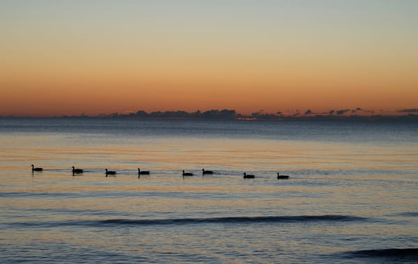 All In A Row Photography Art | Elizabeth Stanton Photography