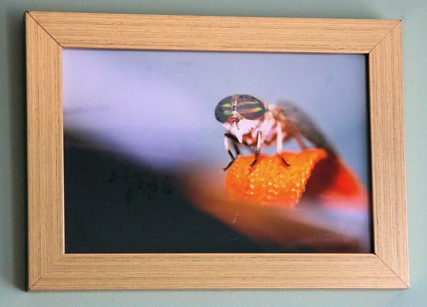 Supafly Photographic Image Framed Metallic Paper Print Under Glass Art | ArtHouse Kentucky
