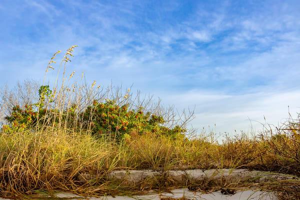 Morning Dunes By Dan McCarthy